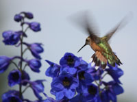 Post image for Google Hummingbird, Social Media Strategies, Facebook Contests #FridayFinds